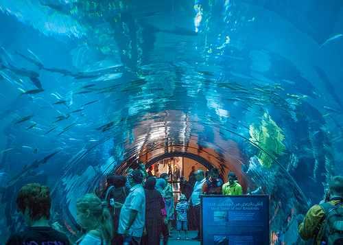 Dubai-Underwater-Zoo