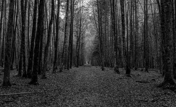 The-Black-Forest
