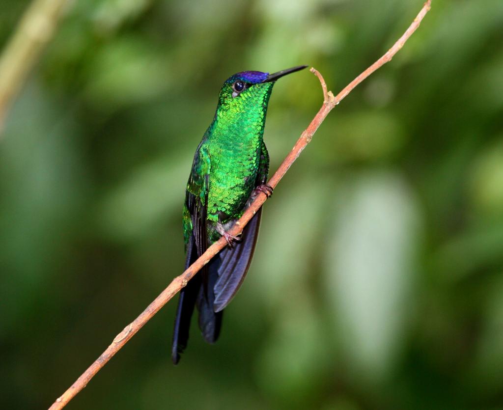 Pantanal Brazil photo