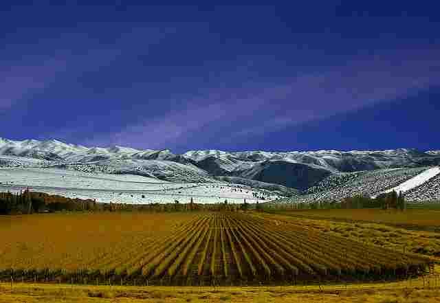 Mendoza-Wine-Regions