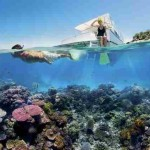 Great Barrier Reef Facts