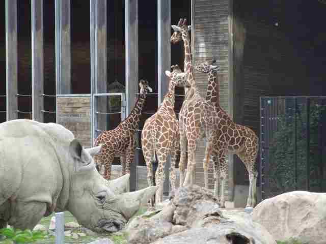 Copenhagen-Zoo