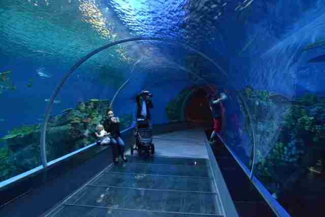 The-Blue-Planet-Tunnel