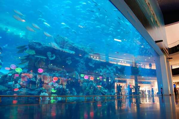 Dubai Aquarium and Under Water Zoo inside Dubai Mall