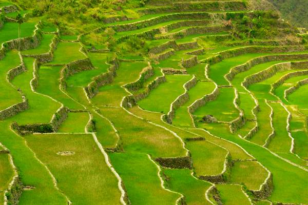 Renowned Rice Terraces