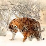 7 Best Wildlife Breaks Around The World